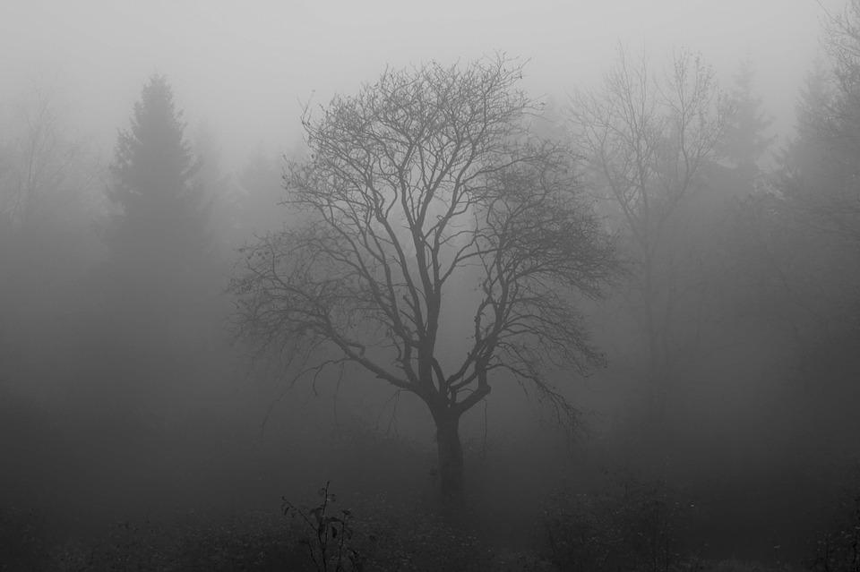 Tree, Fog, Moor, Swamp, Venn, Branch, Structure, Forest