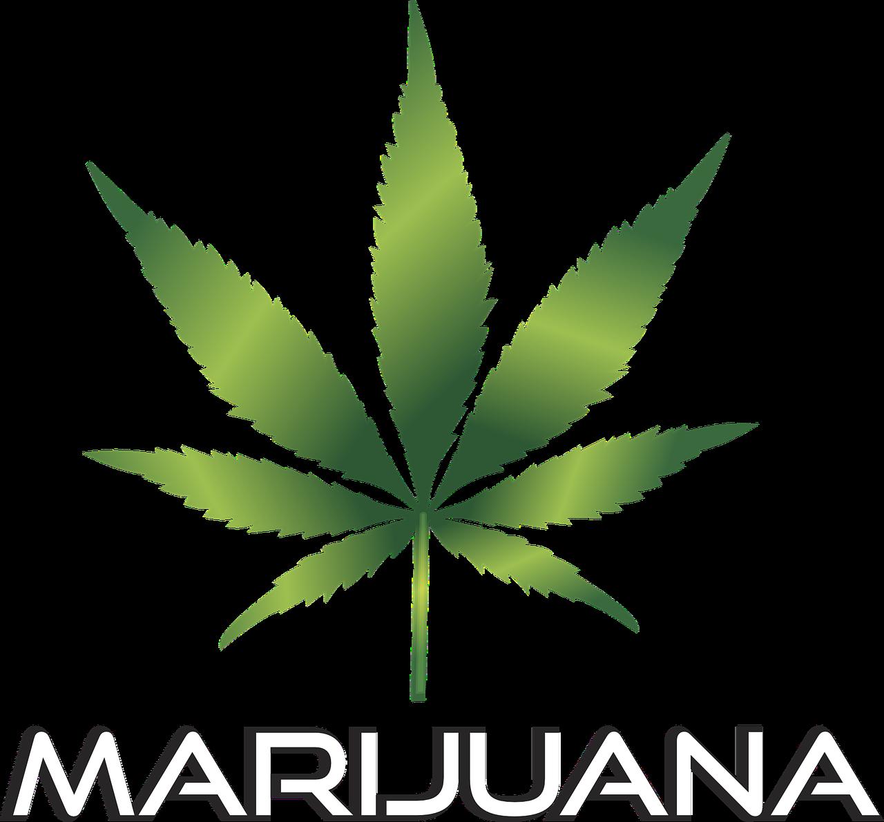 Medical Marijuana Logo  Logo design contest
