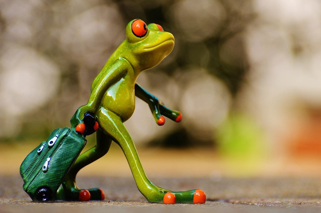 Смешная лягушка в картинках
