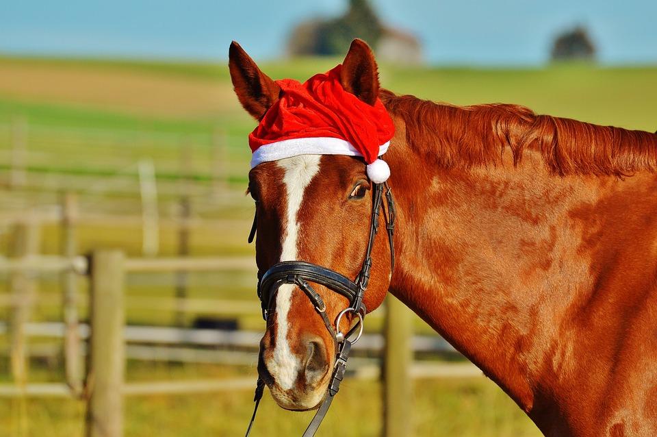 photo cheval noel