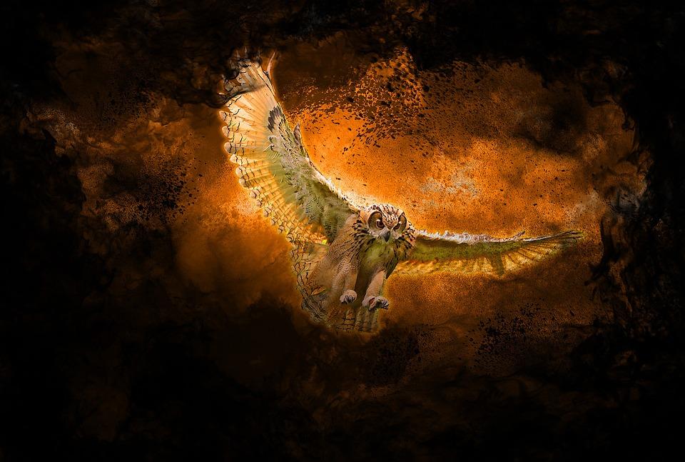 Seni Kreatif Grafis Burung Gambar Gratis Di Pixabay