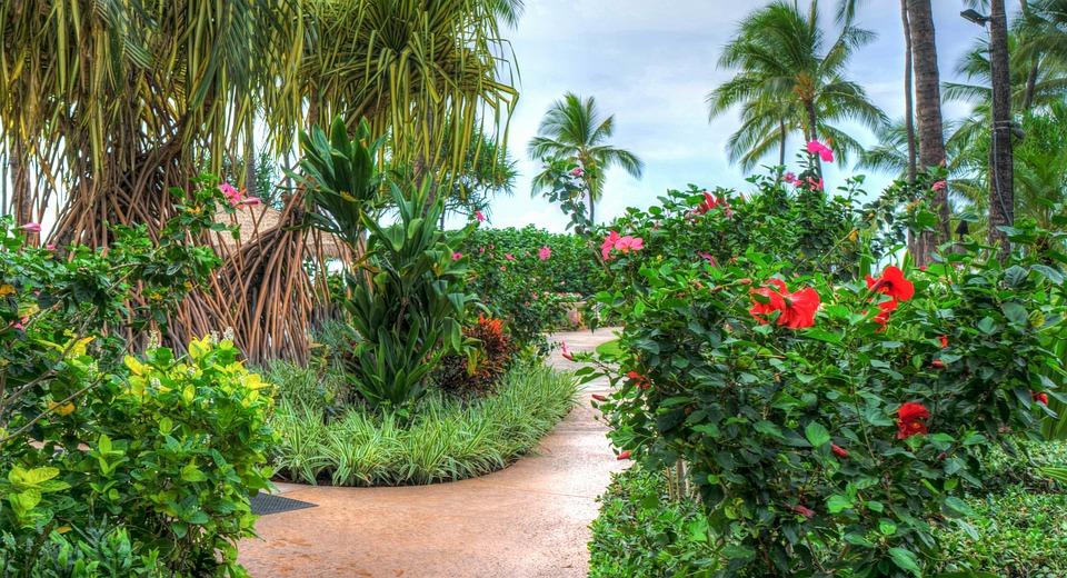 free photo  hawaii  oahu  ko olina  marriott - free image on pixabay