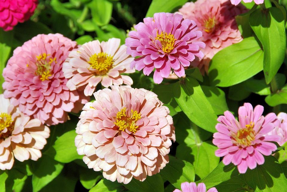 free photo exotic flower, pink, bouquet  free image on pixabay, Beautiful flower