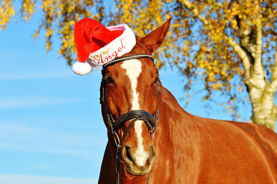 horse christmas santa hat funny animal ride - Horse Christmas