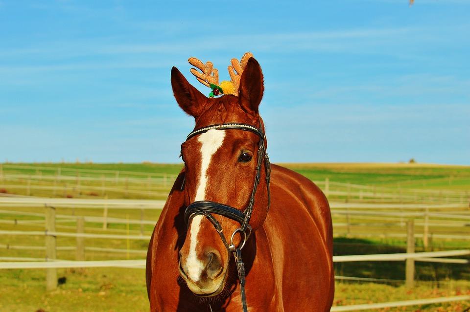 horse christmas funny animal ride reiterhof cute - Horse Christmas