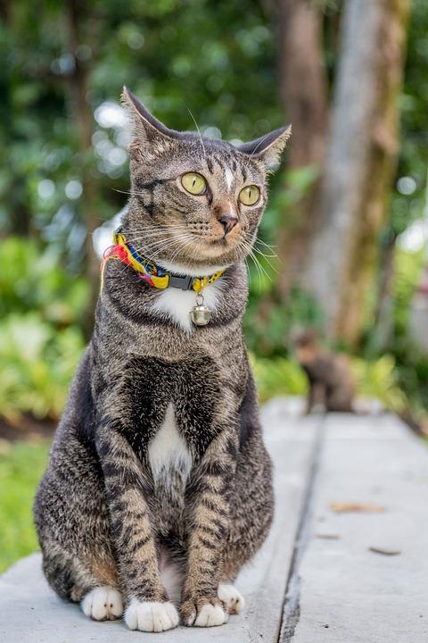 猫,泰国猫,目鱼,章鱼,麝香v目鱼乌贼墨鱼公园鱿鱼麝香图片