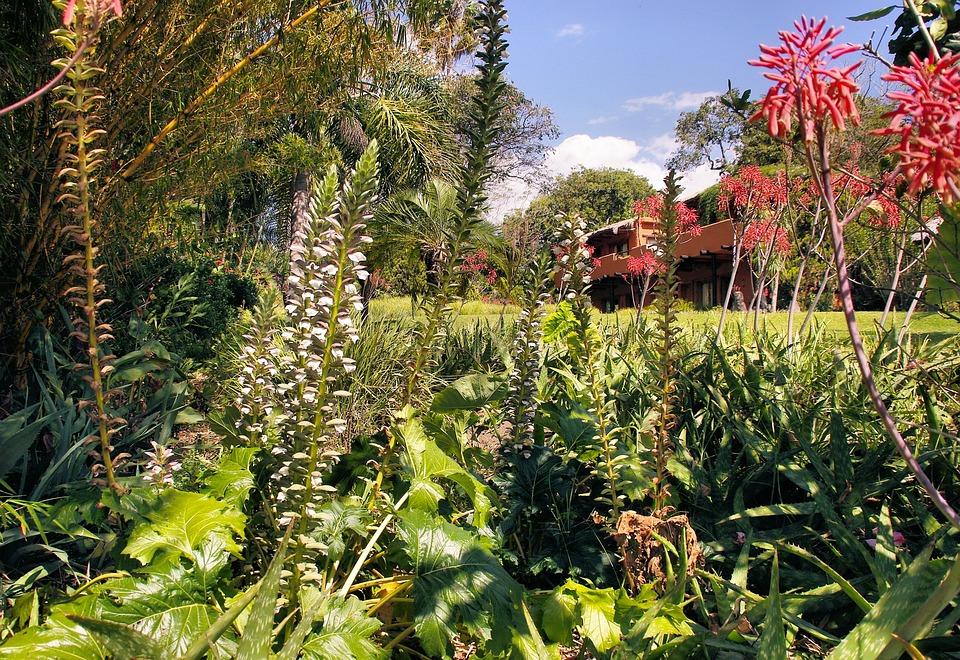 Photo gratuite guatemala jardin exotique image for Plante exotique jardin