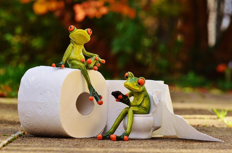 frog toilet loo free photo on pixabay. Black Bedroom Furniture Sets. Home Design Ideas