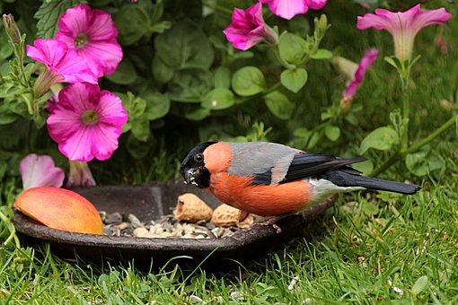 Frühjahr Bilder Pixabay Kostenlose Bilder Herunterladen