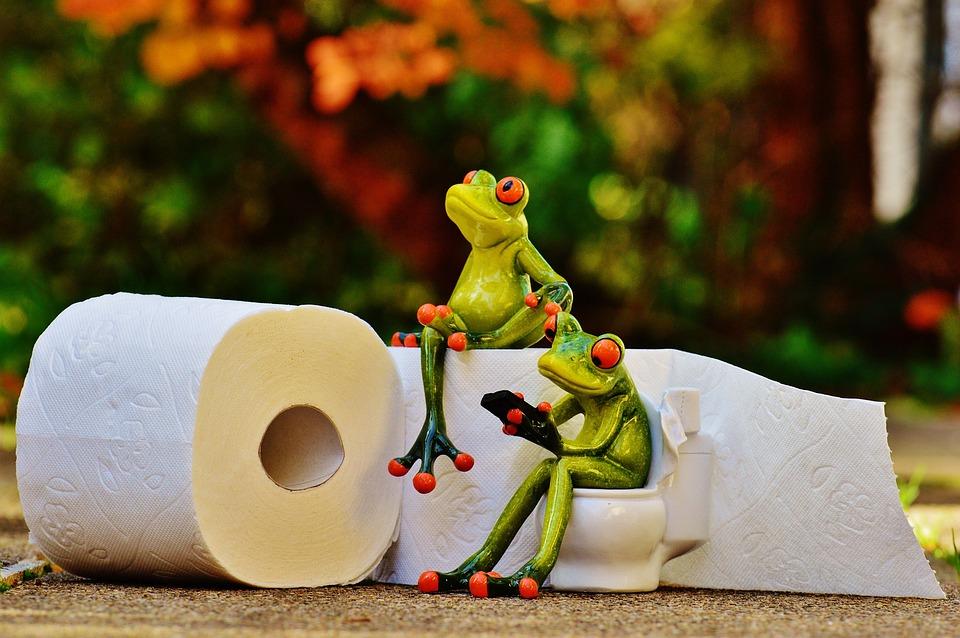 カエル, トイレ, セッション, おかしい, トイレット ペーパー, かわいい, 携帯電話, 緑, 動物