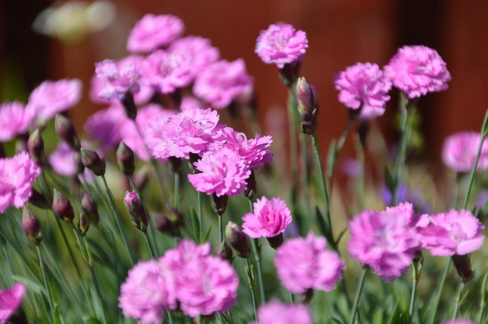 Flower pink free photo on pixabay flower pink violet mightylinksfo