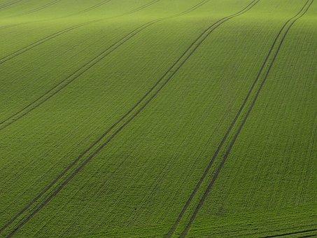 Rügen, Field, Arable, Cereals, Green