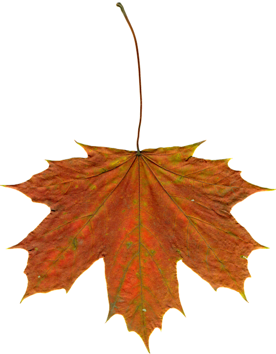 Free photo: Leaves, Autumn Leaves, Clipart - Free Image on Pixabay ...