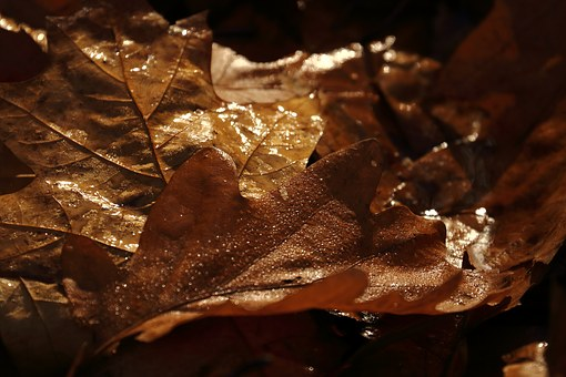 Herbstlaub, Braun, Waldboden