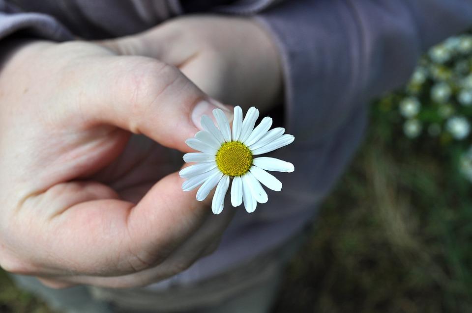 Fleur Main Marguerite Photo Gratuite Sur Pixabay