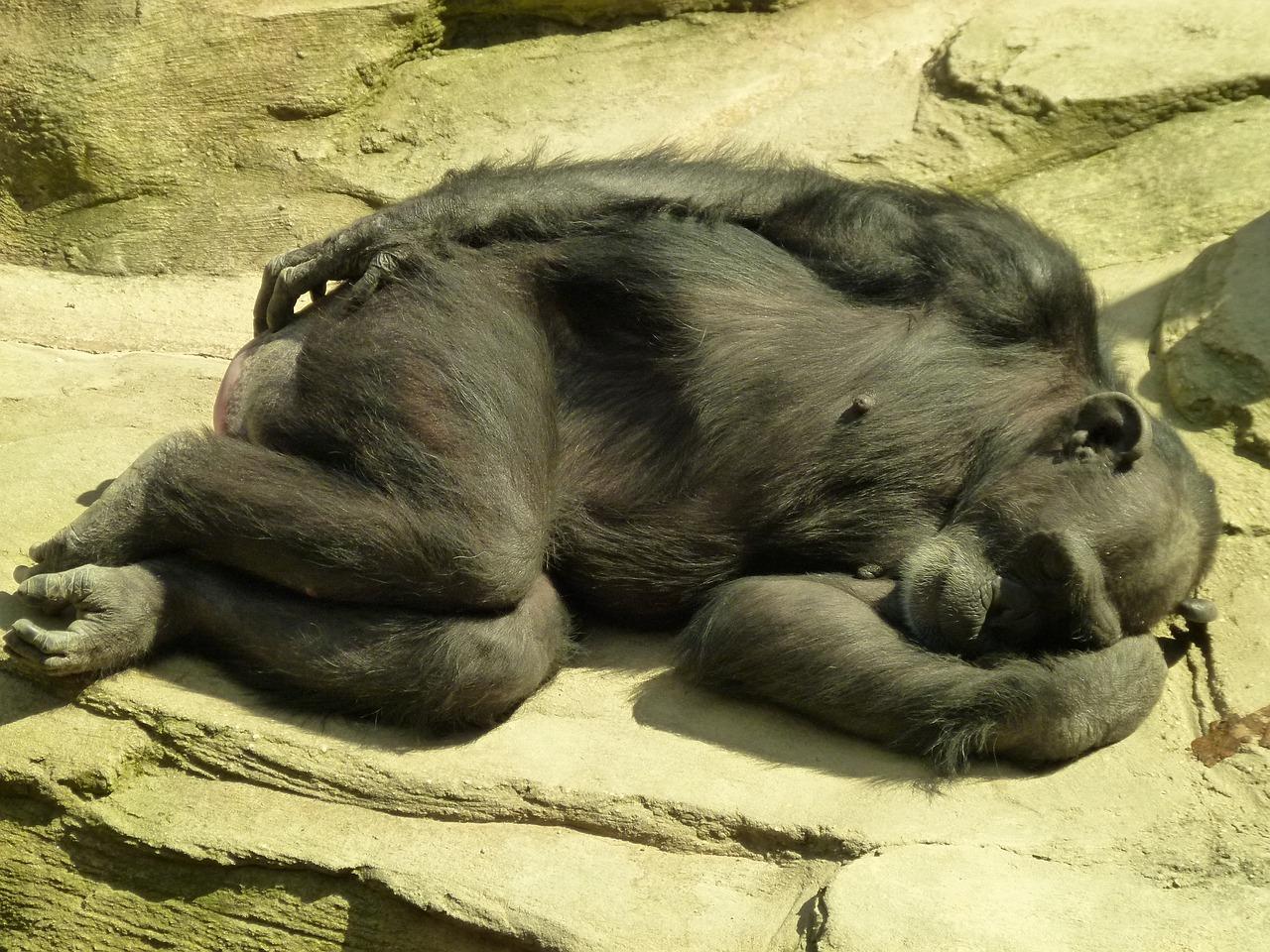 обоях фото как спят животные раз