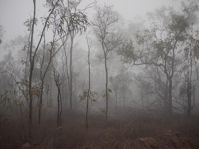 Free Photo Fog Spooky Trees Mist Dark Free Image On