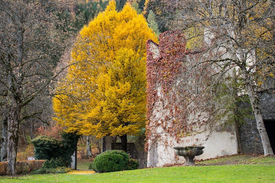 Baum, Park, Herbst, Grünanlagen, Parklandschaft