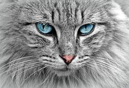 Cat, Animal, Cat Portrait, Mackerel