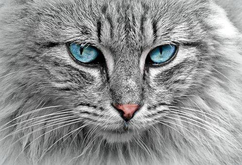 Cat, Des Animaux, Portrait De Chat