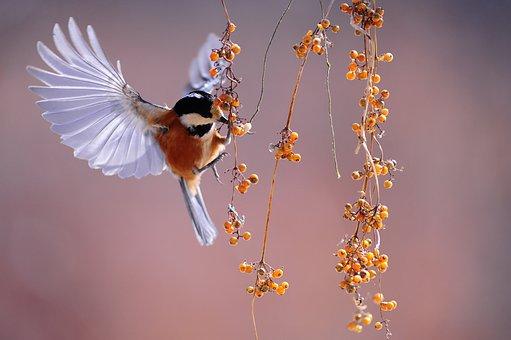 Oiseau, Ailes, Flottant, Nature