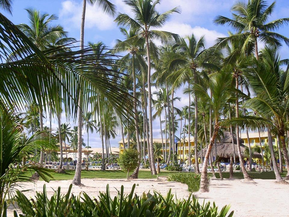 Dominikana, Palmami, Karaibów, Wakacje, Ciepłe, Karaiby