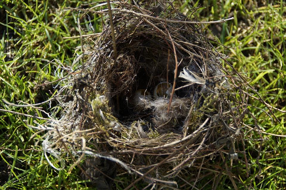 kostenloses foto vogeleier nestr uber nest eier kostenloses bild auf pixabay 1047250. Black Bedroom Furniture Sets. Home Design Ideas