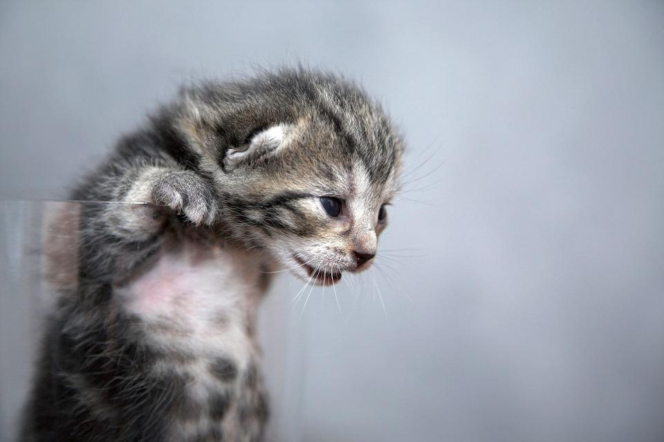 Mačička detailné pic