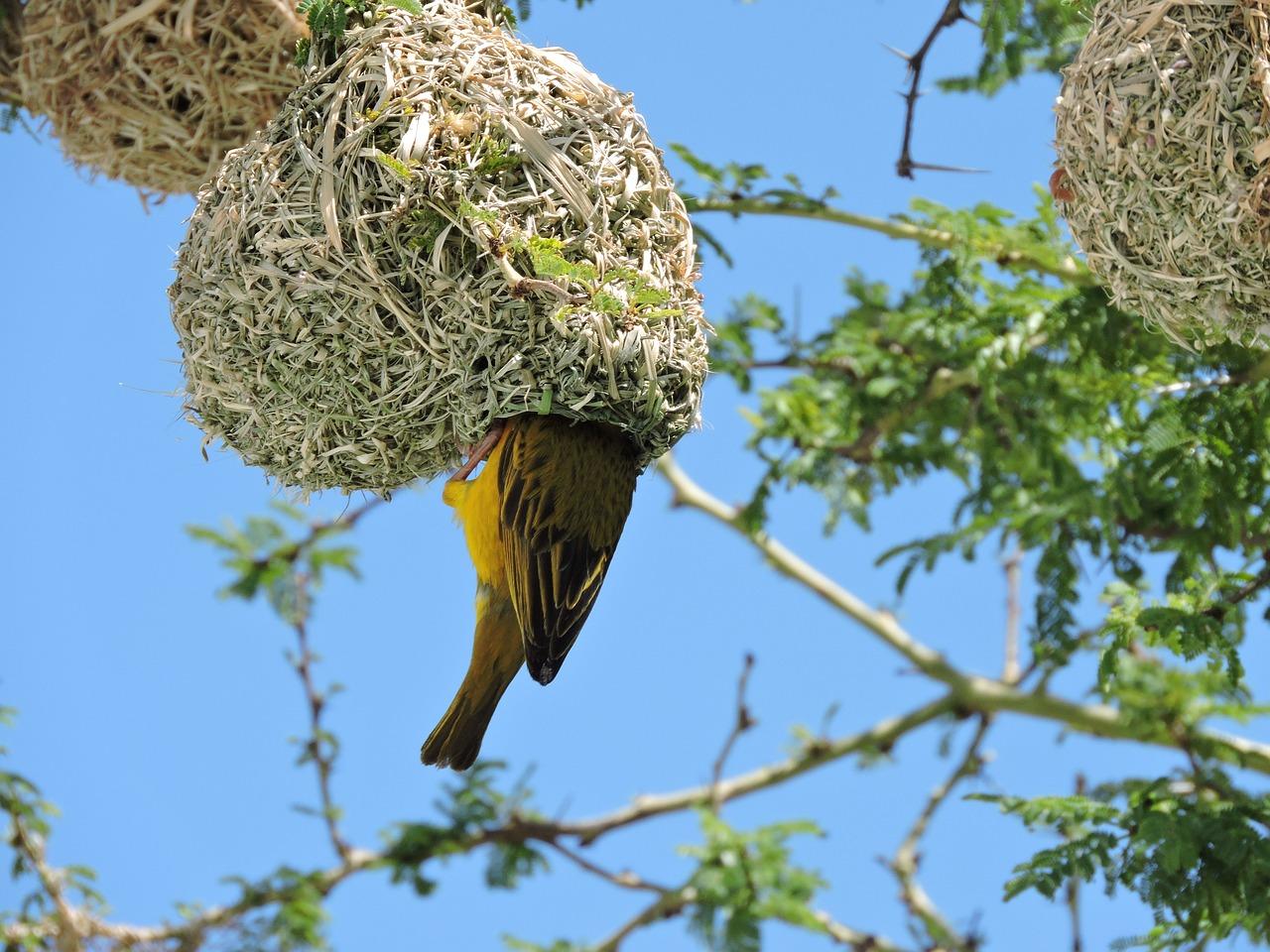 картинки гнезда птиц на дереве вашему вниманию