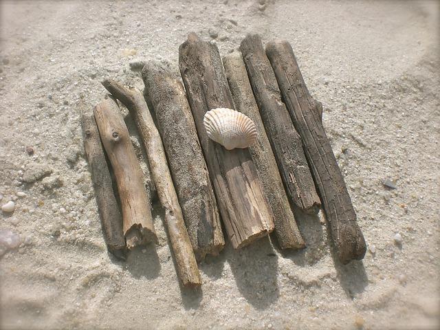 Photo gratuite bois flott paves moules plage image for Recherche bois flotte