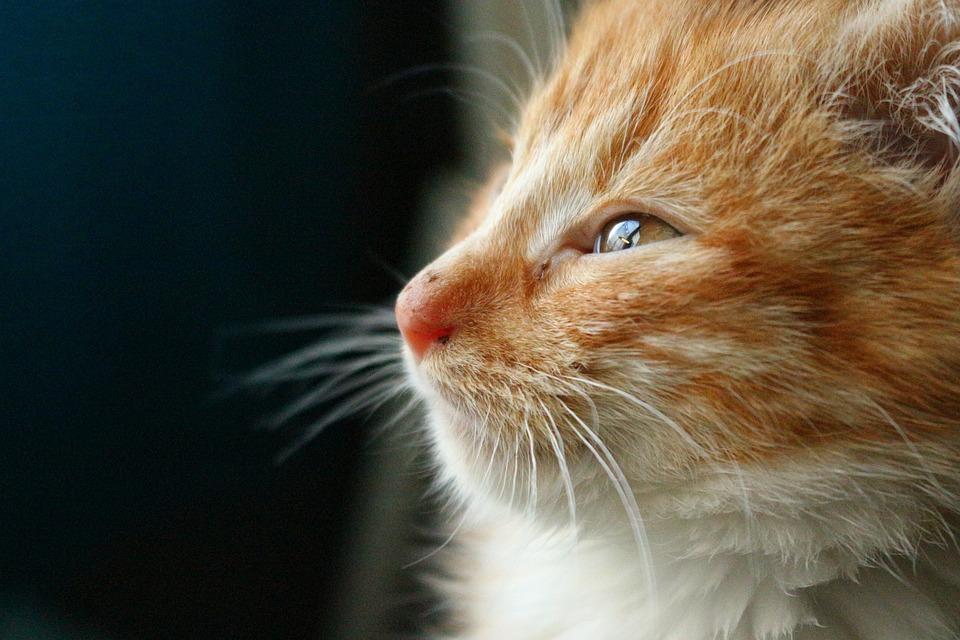 mačička mladé fotky