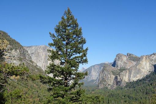 Valley, Vegetation, Incense Cedar