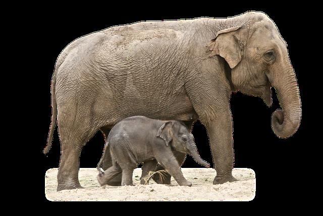 Elephant Animal African · Free Photo On Pixabay