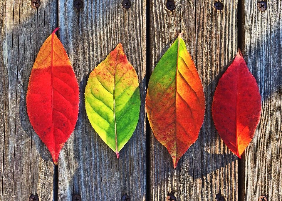 葉, 秋, 色, 虹