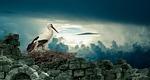 stork, nest, bird