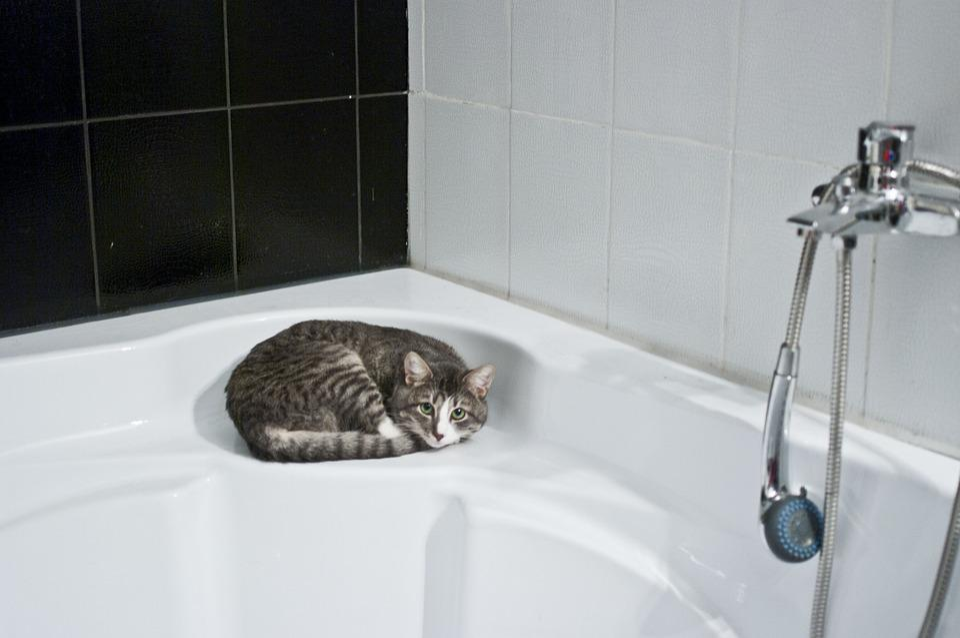 Kedi, Banyo, Duş Başlığı