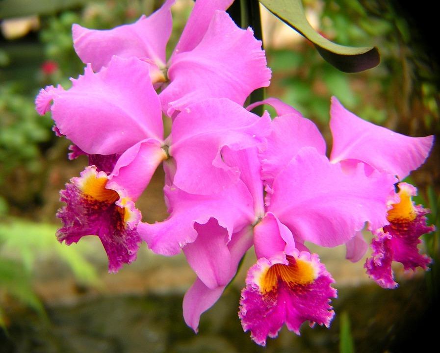 Orquideas flores imagenes for Cuidado de las orquideas moradas