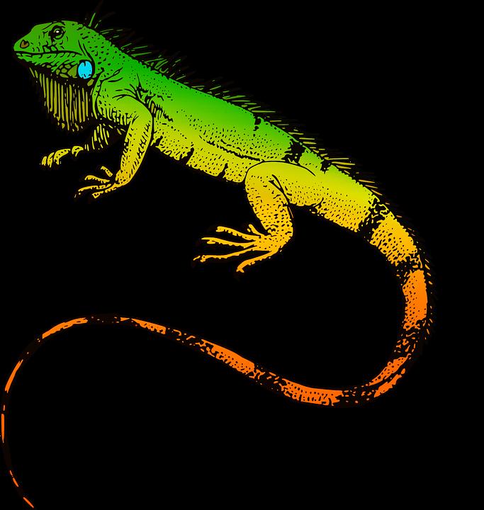 reptiles iguana animal  u00b7 free image on pixabay husky clipart outline husky clip art png