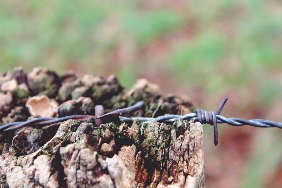 Holzmast Draht Drahtzaun · Kostenloses Foto auf Pixabay