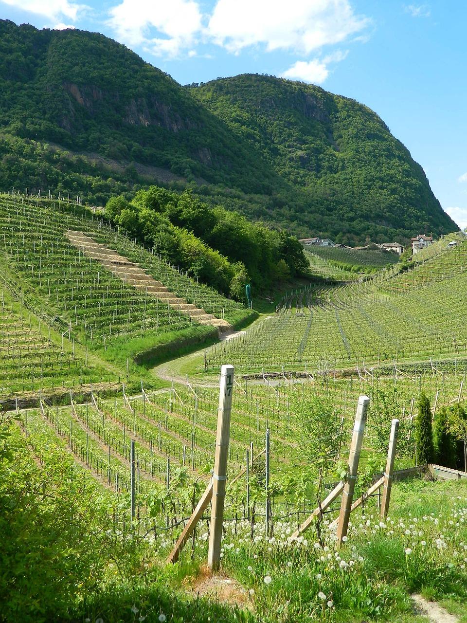 итальянские виноградники фото популярными точными