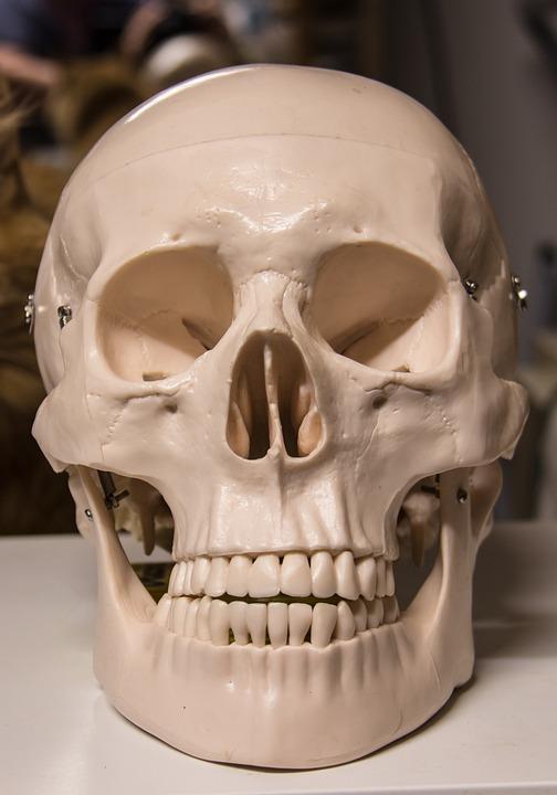 Free Photo Skull And Crossbones Skull Free Image On