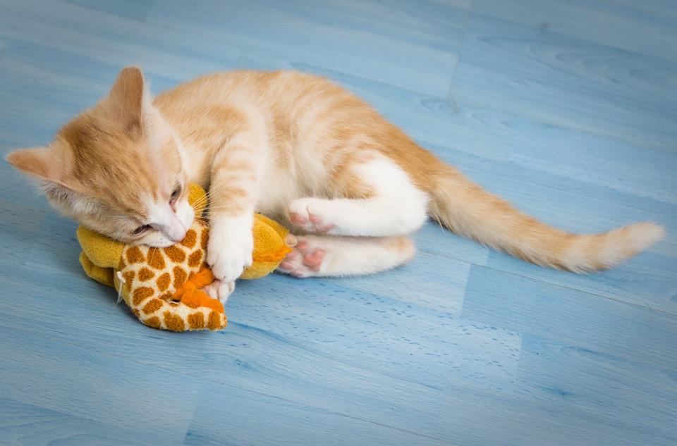 Cat Kitten Play Stuffed Free Photo On Pixabay