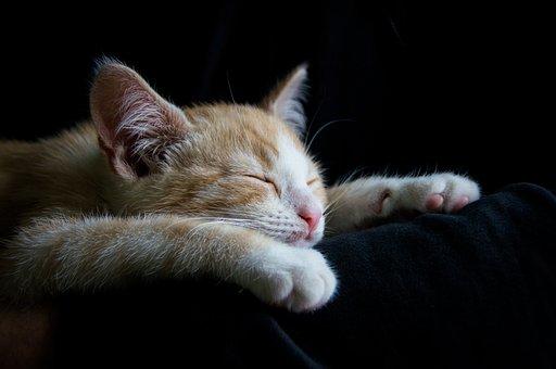 猫, 居心地のよい, 睡眠, おやすみなさい, 疲れた, かわいい, 赤, 白