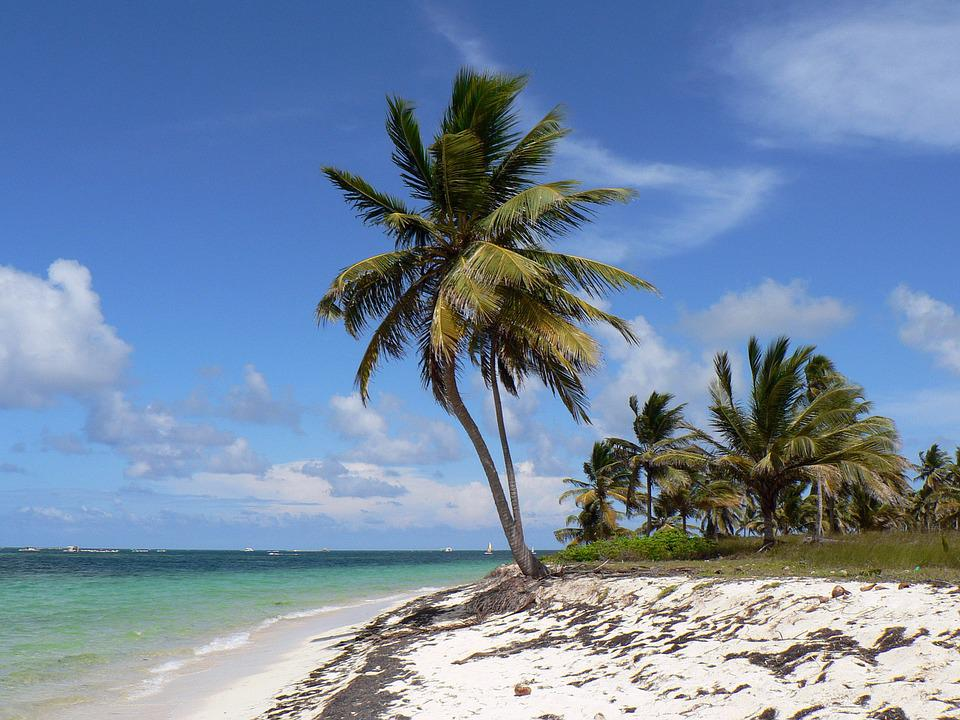 Dominikana, Punta Cana, Beach, Kokosowe, Morza, Wakacje