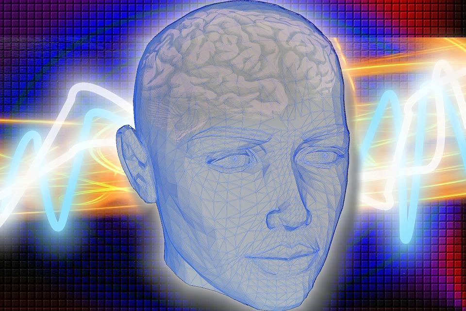 Head, Brain, Radiology, Medical, Human, X Ray, Anatomy