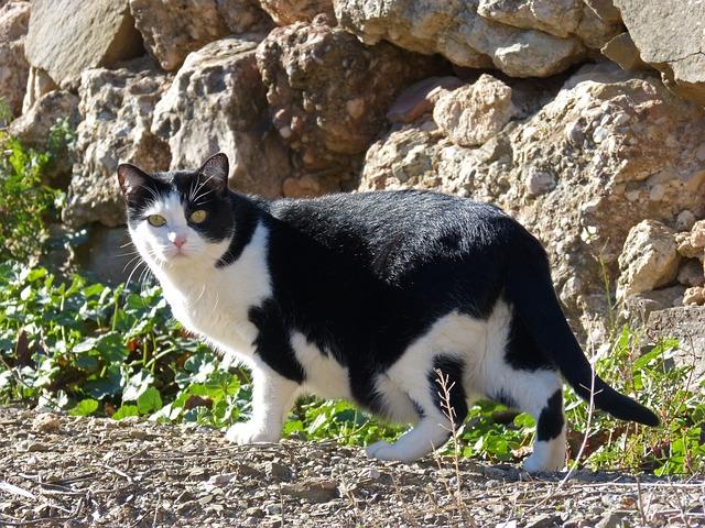 Black Cat Floral Facebook
