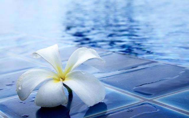 Flowers Delightful Refreshing · Free photo on Pixabay