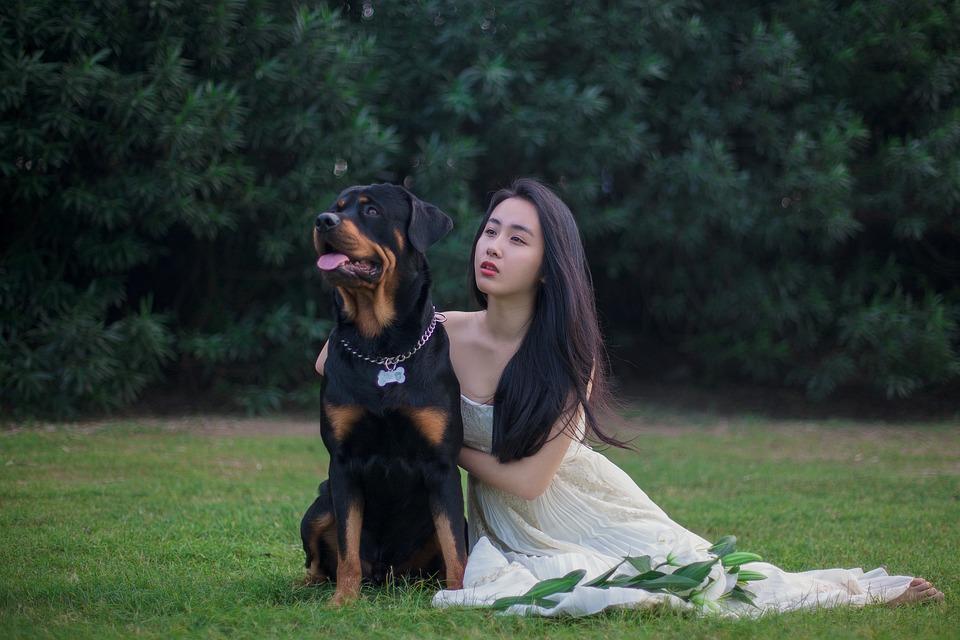 Rottweiler, Perro, Vestidos De Novia, Césped, Lily
