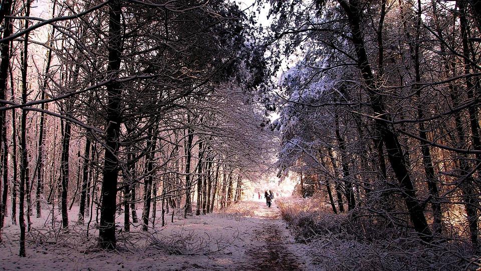 gratis foto sneeuw winterlandschap bos gratis afbeelding op pixabay 1060963. Black Bedroom Furniture Sets. Home Design Ideas