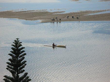 Kayak, Sunrise, Pelicans, Nature